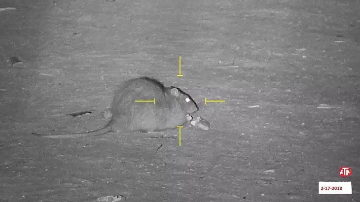 【閲覧注意】エアガンでネズミをヘッドショット。痙攣し絶命するネズミのグロ動画。