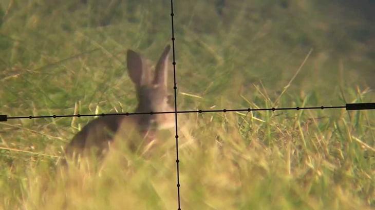 ハンターうさぎの頭をエアガンで撃ち抜くグロ動画。