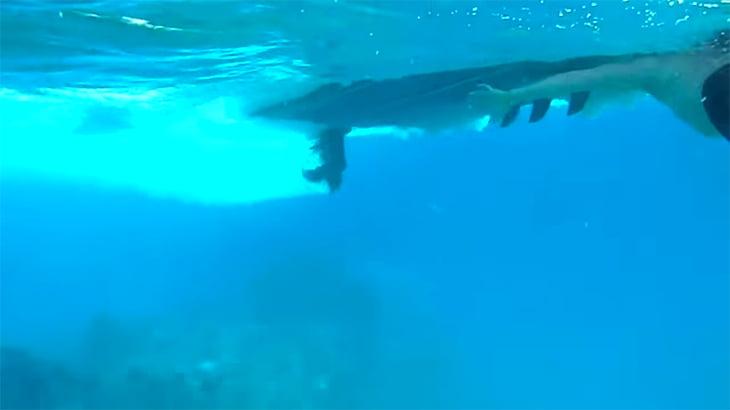 【閲覧注意】ダイビング中にボートのスクリューで頭を割られてしまうグロ動画。