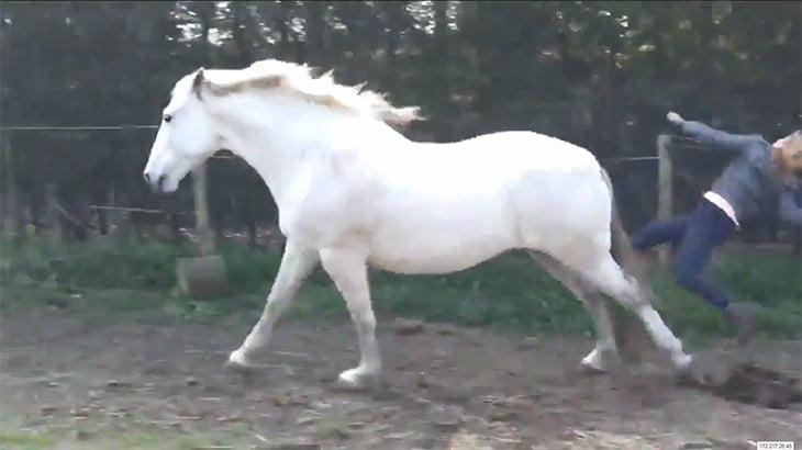 馬の足蹴りでアゴを砕かれてしまった女性の映像。めっちゃ腫れてる・・・。