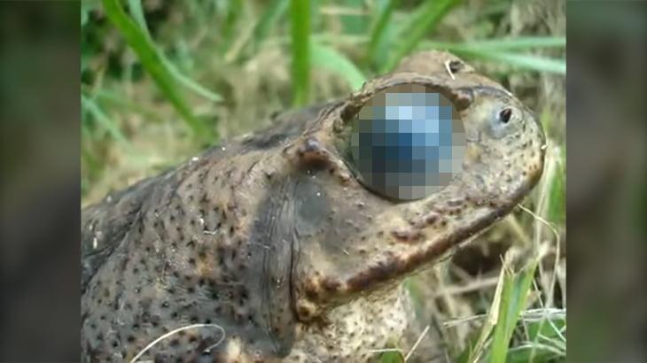 【閲覧注意】気持ち悪すぎる・・・。寄生虫がカエルの目の中で動きまくるグロ動画。