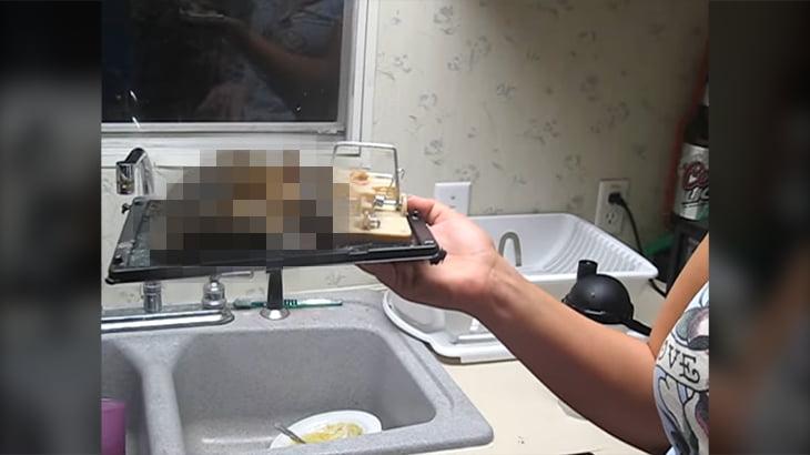 【衝撃映像】捕獲されたネズミが大きすぎて恐怖を感じるレベル。