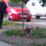 【閲覧注意】通行人を襲った犬、銃で少しずつ苦しみながら殺されるグロ動画。