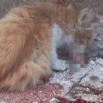 【閲覧注意】猫の共食い。脳みそらしきものを美味しそうに食べるグロ動画。