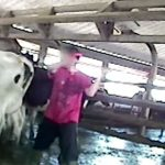 「バーガーキング」の農場で行われている牛への虐待映像が酷い。
