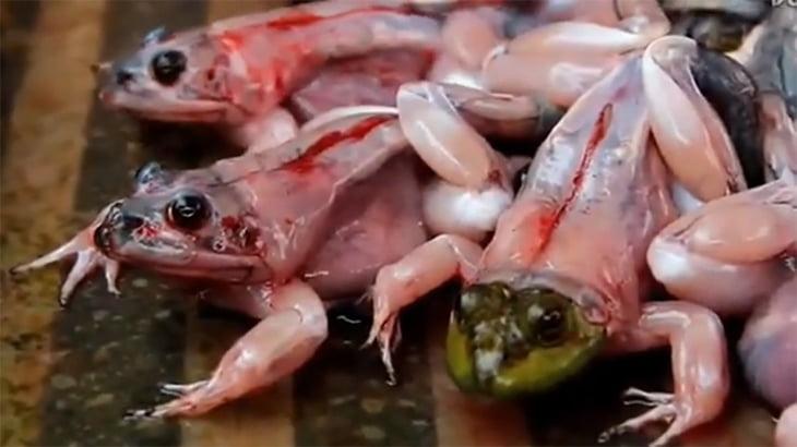 【超!閲覧注意】皮膚を剥ぎ取られてもまだ生きているカエルのグロ動画。