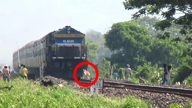 【インド】時速110kmの電車に轢かれて弾け飛ぶ牛の動画。