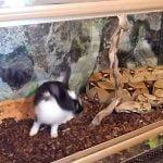 【閲覧注意】生きたウサギを絞め殺す巨大なヘビの動画。