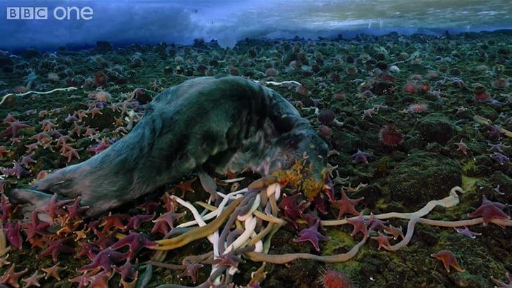 """死んだアザラシを食べる """"ヒトデ"""" と """"ワーム"""" のタイムラプス映像にゾワゾワする・・・。"""