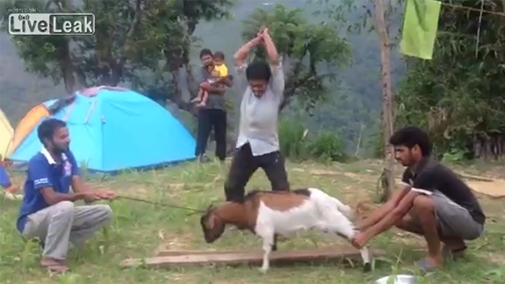 【閲覧注意】ヤギを食べよう。頭を切り落とすグロ動画。