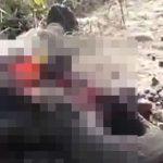 【閲覧注意】電車に轢かれたゾウ、バラバラになってしまったグロ動画。