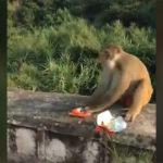 【衝撃映像】サルへのいたずら。菓子袋に爆竹いれて手を吹き飛ばす動画。