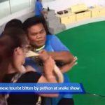 蛇にキスしようとした女性、噛まれてしまう動画。
