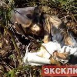 【閲覧注意】森の中から248人の赤ちゃんの死体が見つかる。