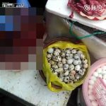 【閲覧注意】路上で売られているウズラ、捌かれタマゴを取り出されるグロ動画。
