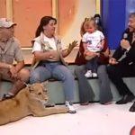 生放送中のTVであやうくライオンに食われそうになった女の子。