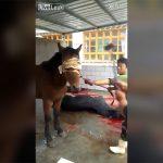 【閲覧注意】売られている「馬肉」はこうして作られる。