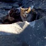 【閲覧注意】悲惨な末路。ISISテロリストが野良猫に食われるグロ動画。