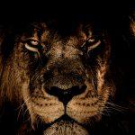 【閲覧注意】「銃を持った人間たち」 vs 「1匹のライオン」。
