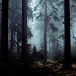"""【閲覧注意】森の奥深くで """"こんなことしてる奴ら"""" には遭遇したくない・・・。"""