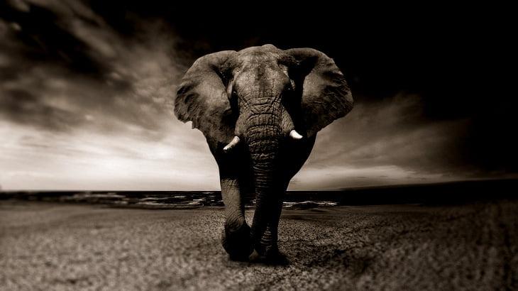 """【閲覧注意】違法である """"象の牙"""" を密輸するために女は """"とんでもないところ"""" に隠した。"""