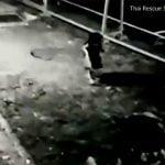 4歳の女の子が行方不明に。監視カメラに恐ろしい映像が・・・。