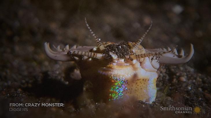 """海底には """"こんなにおぞましい生き物"""" がいるという事実・・・。"""