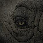 """【閲覧注意】ゾウの検死のため、""""胃の中"""" に入り込むグロ動画。"""
