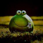 """【衝撃映像】このカエル、""""顔が無い"""" のに生きてるグロ動画・・・。"""