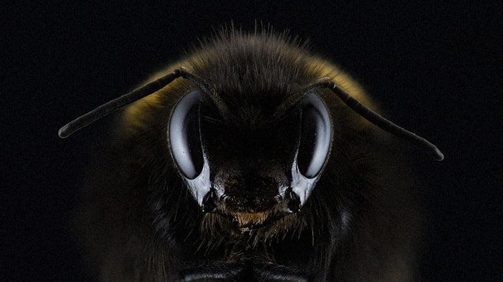 【衝撃映像】頭が切断されたスズメバチを撮影していた結果、予想外の展開に・・・。