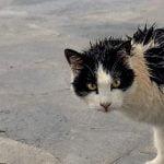 """【閲覧注意】Youtubeに """"猫の死体動画"""" あがってるんだけど・・・。"""