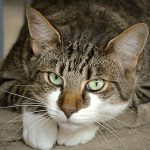 """【捕食動画】猫が """"何かを美味しそうに"""" 食べてる → 近づいてみるとソレは・・・。"""