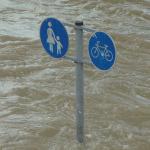 """街が洪水に見舞われれば当然 """"こういうモノも"""" 流れてくるよな・・・。"""