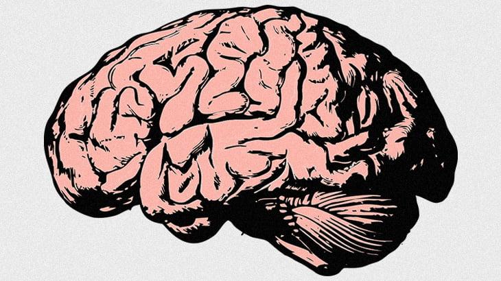 """死んだ動物の """"脳ミソ"""" 放置してみた結果 → こうなる。"""