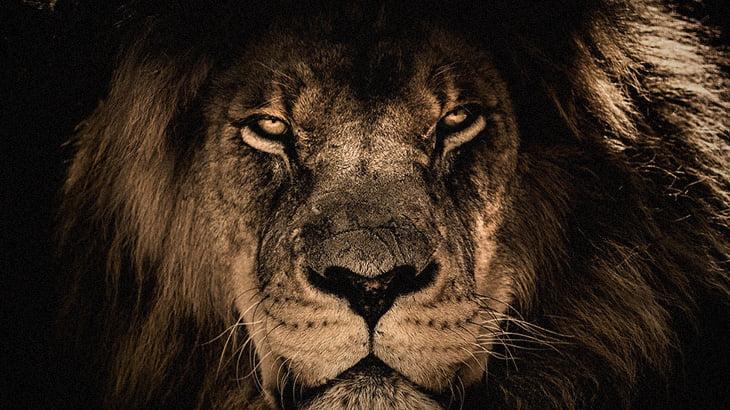 【捕食動画】「ライオンとトラに七面鳥をあげてみたよ!」→ 高評価。