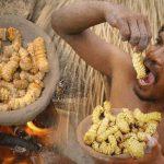 """森でお腹が減ったら高タンパク質の """"この生き物"""" を食べよう!"""
