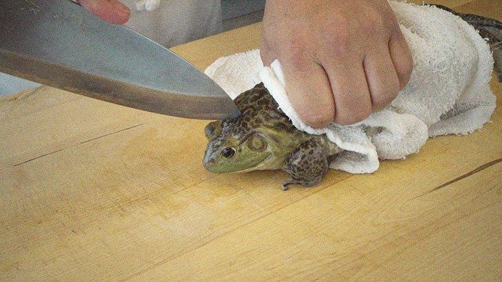 【閲覧注意】カエルを使った中華料理(広東風)の調理風景。冒頭からヤバイ・・・。
