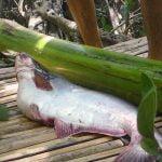 「大きな魚の腹の中にウナギが入ってたからどっちも食べるね!」
