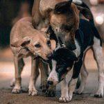 【閲覧注意】犬肉業者の取材中、思わず吐いてしまう女性レポーターのグロ動画。