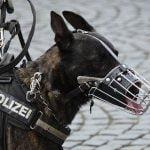 【閲覧注意】警察官に襲われた男、鼻を噛みちぎられてしまう。