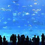 【中国】サメが入った33トンの水槽が爆発。