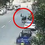 【衝撃映像】街の中で怒り狂う水牛に吹き飛ばされてしまう男性。