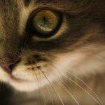 """【閲覧注意】両目を """"寄生虫"""" に食われてしまった子猫のグロ動画・・・。"""