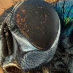 【閲覧注意】生きながら身体の一部をウジ虫に食われている人間のグロ画像集。