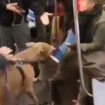 地下鉄でピットブルが女性を襲撃。なぜか飼い主が逆ギレ・・・。
