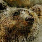【閲覧注意】クマに食われてしまった男性、ヤバい姿になってしまったグロ画像。
