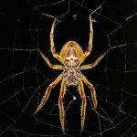 背中に無数の赤ちゃんをびっしり付けた大きな蜘蛛。こんなん震えるわ・・・。
