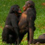 お猿さん「喧嘩してるのボスにバレた!とりあえずセックスしなきゃ!」
