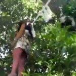 """【閲覧注意】木の上に """"女性の死体"""" がぶら下がってるんだけど・・・。"""