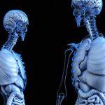 【閲覧注意】脳と脊髄が繋がったまま摘出されるとこうなる。